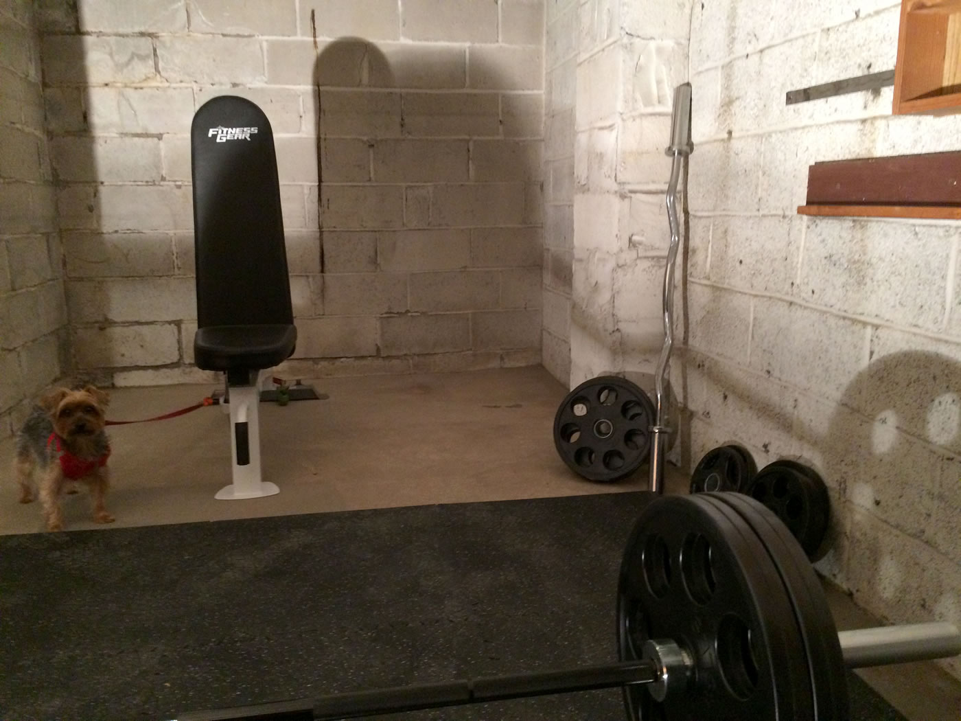 Building a home gym - rogue fitness ohio power bar and hudson steel co olympic weight plates.